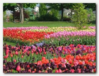 Arboretum_Volcji_Potok.jpg